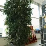 DODO - výzdoba umělé rostliny