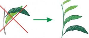 aranžování umělých rostlin