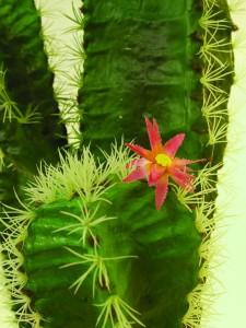 umělý kaktus jako živý