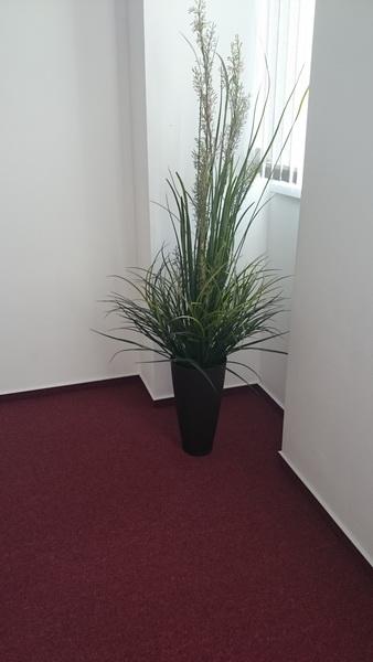 reference - umělé rostliny - kancelářské prostory