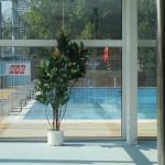 reference umělé palmy pro aqupark