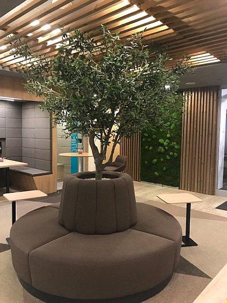 umělá mechová stěna, umělý strom olivovník